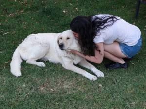 En esta foto, Tora (una preciosa mezcla de labrador con mastín) me está diciendo que no quiere mimos. Pero yo en aquella época no sabía cómo se comunican los perros.