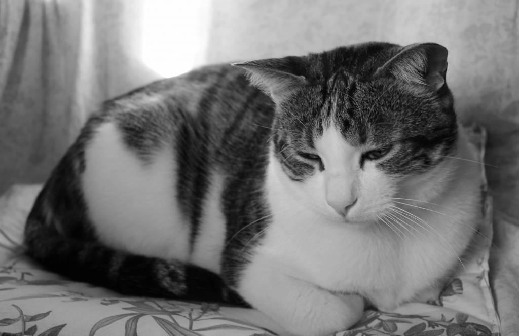 ¿De verdad quieres regalar un perro o un gato que acabe triste?
