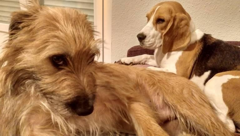 Miedo y estrés en perros