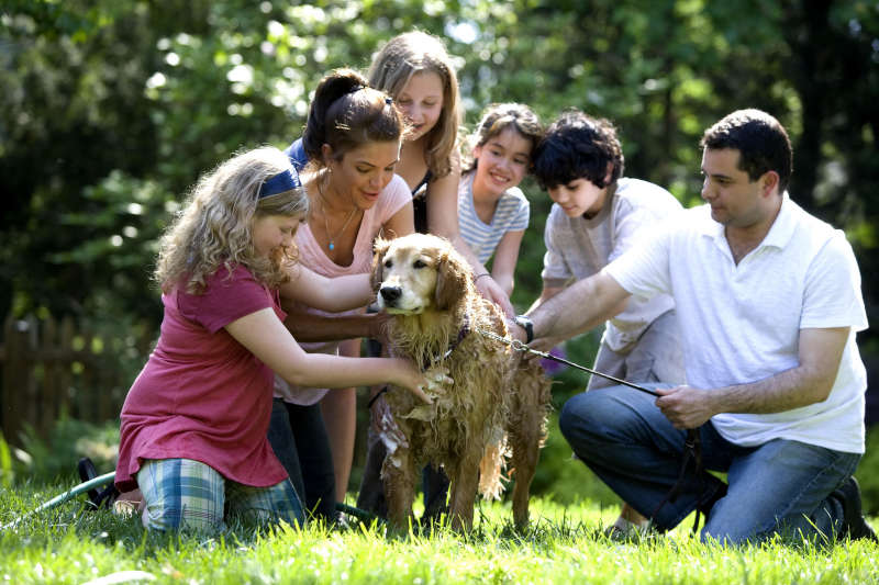 Mother father and four children with their dog playing outside