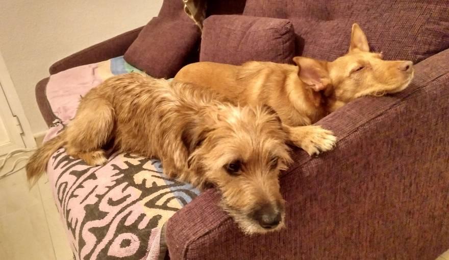 Pelos y Luna compartiendo el sofá