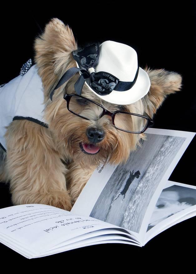 Por suerte tener un perro no implica enseñarle a leer