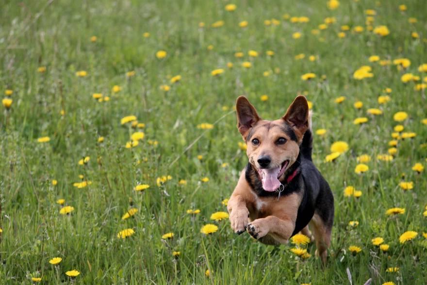 Para evitar que tu perro se pierda, nunca salgas corriendo detrás de él